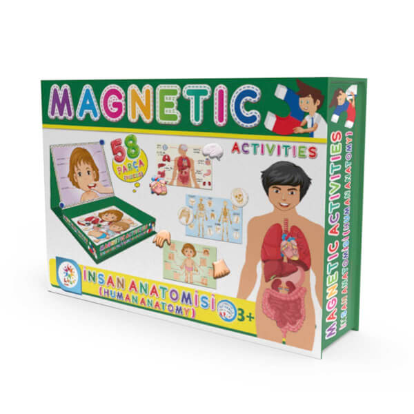 Manyetik İnsan Anatomisi Aktivite Oyun Seti 58 Parça
