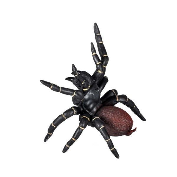 Örümcek Trichtrtspinne